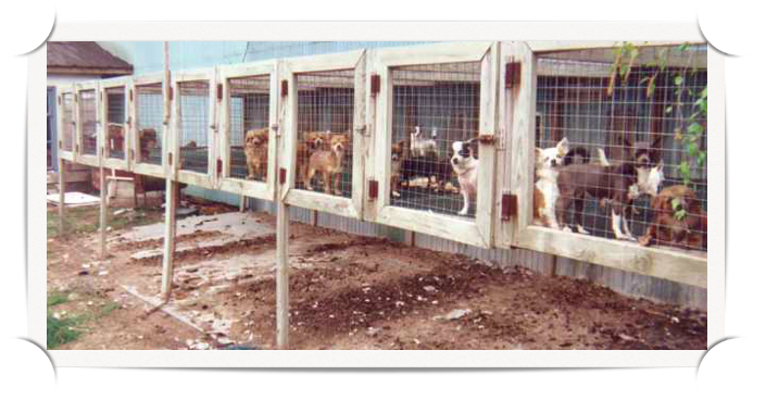 an introduction to animal abuse in puppy mills in the united states News about animal abuse, rights and welfare commentary and archival information about cruelty to animals from the new york times.