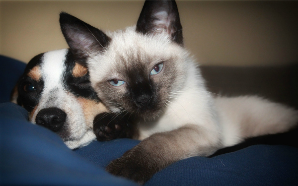 Cat Stressed Because Of New Dog