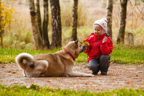 Teach Your Child to Act Responsibly Around Dogs