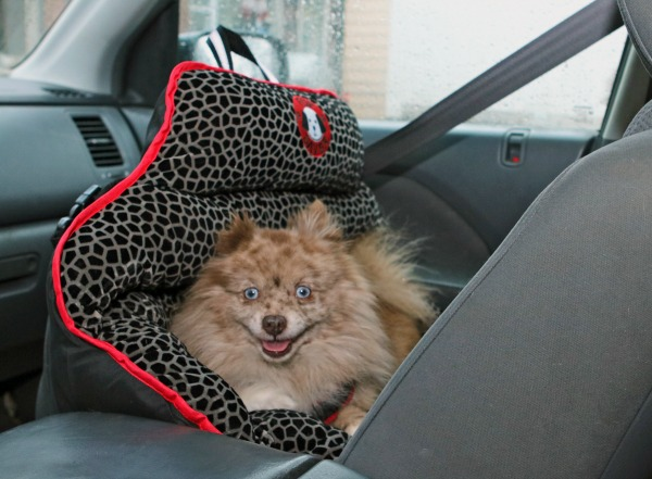 Pupsaver Dog Safety Car Seat
